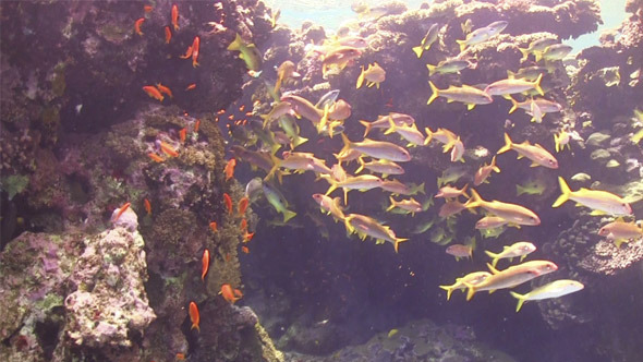 Tropical Fish on Vibrant Coral Reef 726