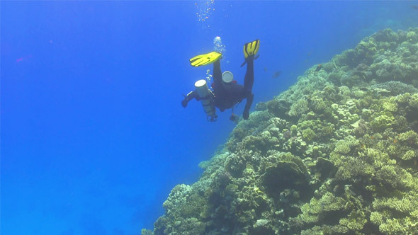Diver Make to Dive in Coral Reef 745