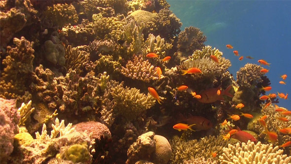 Colorful Fish on Vibrant Coral Reef 761