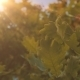 Sunny Tree - VideoHive Item for Sale
