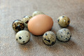 some eggs of the quail - PhotoDune Item for Sale