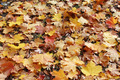 beautiful yellow leaves on the ground - PhotoDune Item for Sale