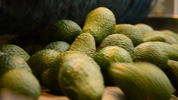 Avocados in Packline