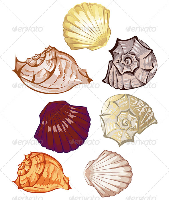 Multi-Colored Seashells