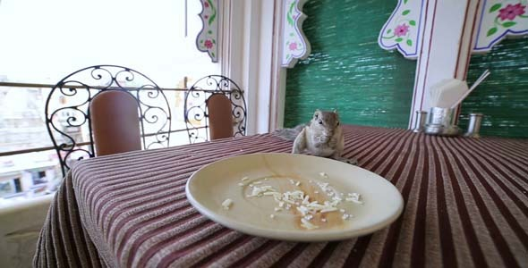 Cute Little Squirrel Eating From Plate