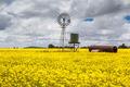 Canola Fields Near Smeaton - PhotoDune Item for Sale