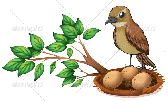 GraphicRiver A bird at the branch of a tree watching the nest 7844187