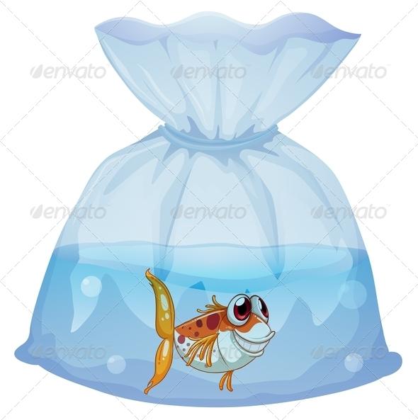Fish inside plastic bag