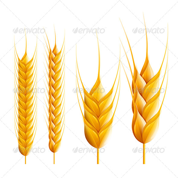 GraphicRiver Wheat 7846679