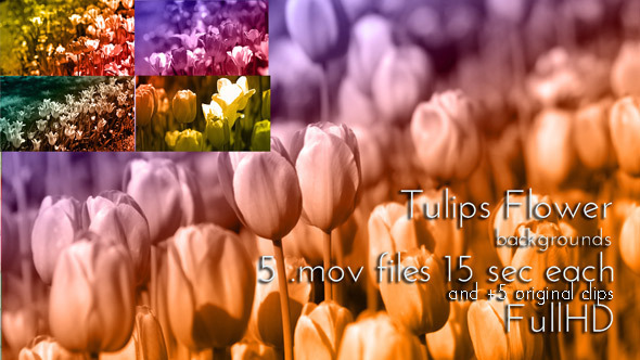 Tulip Spring Flower Duotone Pack