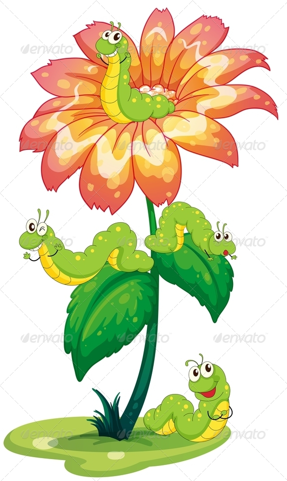 GraphicRiver Flower with worms 7851562
