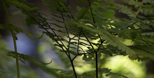Fern And Water 06