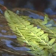 Fern And Water - 09 - VideoHive Item for Sale