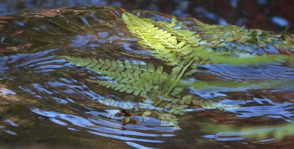 Fern And Water 09