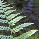 Fern And Water - 10 - VideoHive Item for Sale