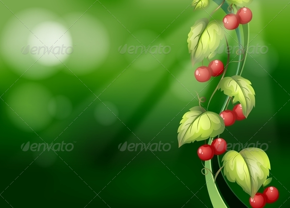GraphicRiver Vine with Fruits 7853852