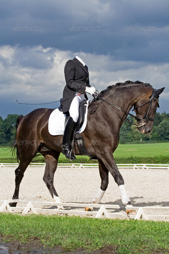 Horse dressage - Stock Photo - Images