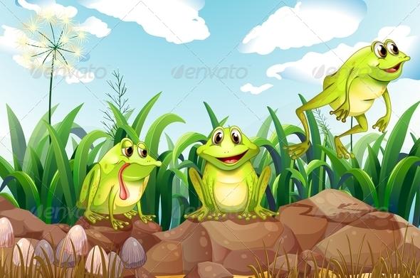 Three frogs on rocks
