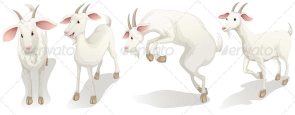 GraphicRiver Four white goats 7862280