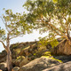Gum Trees - PhotoDune Item for Sale
