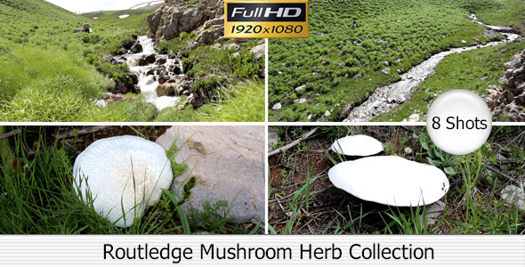 Routledge Mushroom Herb Collection