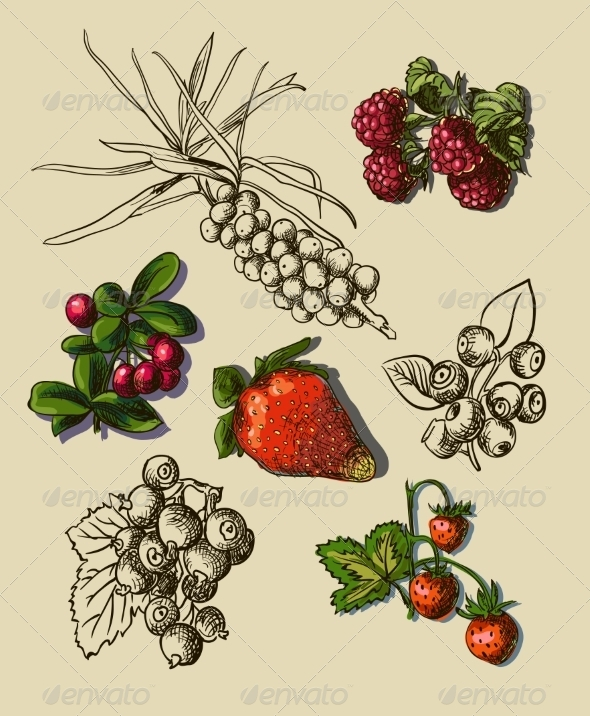 GraphicRiver Illustration Set of Berries 7867188