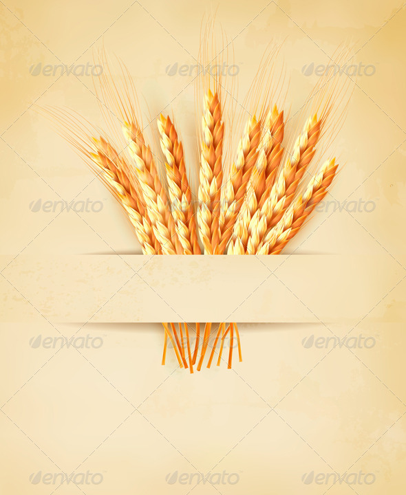 GraphicRiver Ears of Wheat on Old Paper Background 7869240