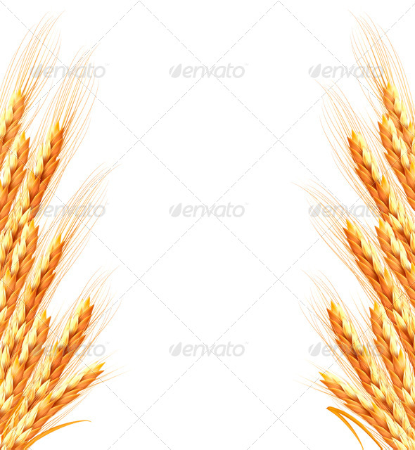 GraphicRiver Ears of Wheat Background 7869250