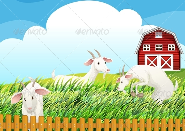 GraphicRiver Farm with three goats 7870012
