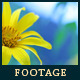 Flower 9 - VideoHive Item for Sale