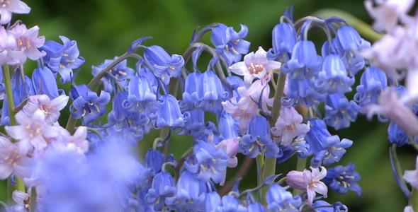 Romantic Garden Bell Flowers 02