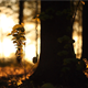 Forest in the Sunset 6 - VideoHive Item for Sale
