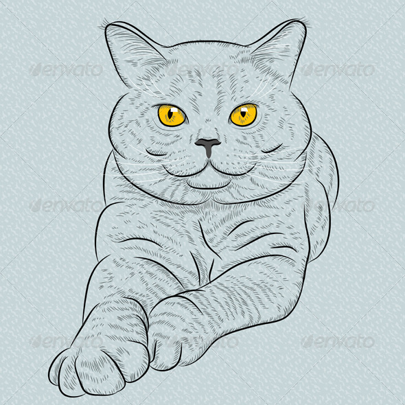 GraphicRiver British Shorthair Blue Cat Lies and Looks 7881975