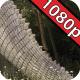 Jurassic Gardens: Stegosaurus - VideoHive Item for Sale