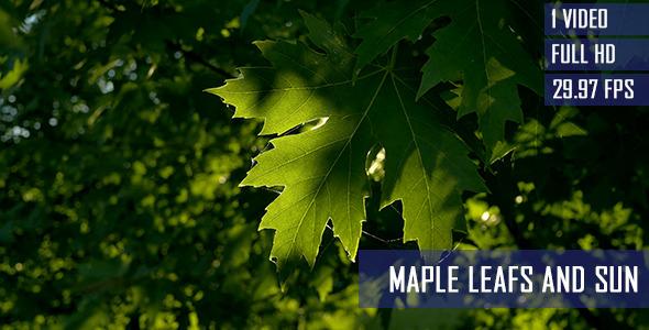 Epic Summer Sunlight Through Maple Leaves