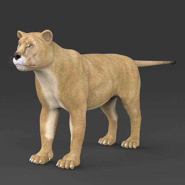 Realistic Lioness - 3DOcean Item for Sale