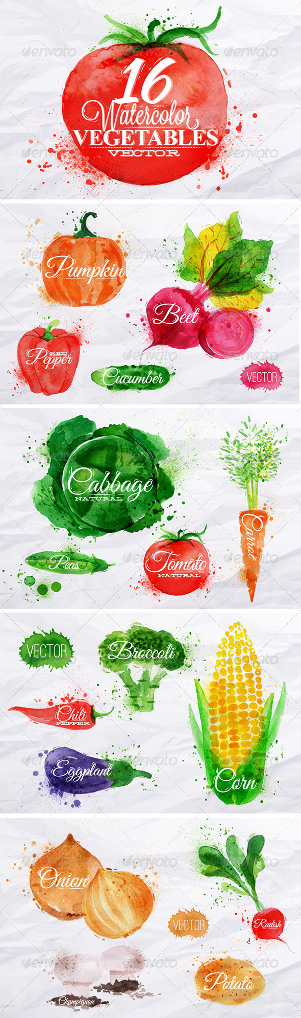 GraphicRiver Vegetables Watercolor 7901997