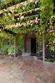 Vine Covered Trellis - PhotoDune Item for Sale