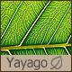 yayago