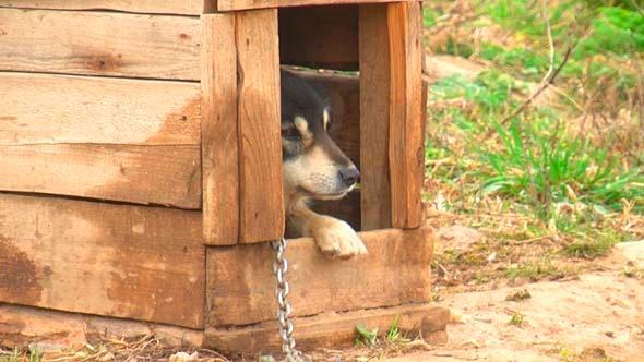 Dog In The Yard 1