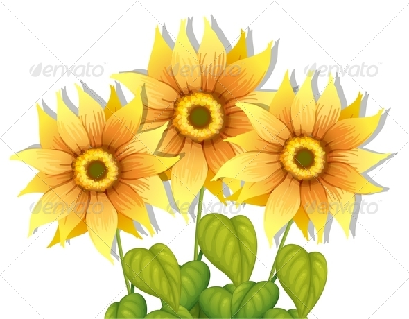 GraphicRiver Blooming Sunflowers 7905024