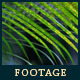 Green Leafs 22 - VideoHive Item for Sale