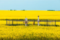 Natural gas wellheads canola agricultural farmland - PhotoDune Item for Sale