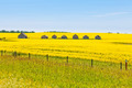 Farm huts canola field agriculture landscape - PhotoDune Item for Sale