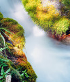 Small forest creek rushing mossy forest ground - PhotoDune Item for Sale