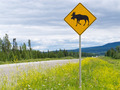 Highway warning roadsign attention moose crossing - PhotoDune Item for Sale