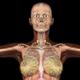Female Body Anatomy - VideoHive Item for Sale