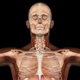 Male Body Anatomy - VideoHive Item for Sale