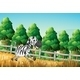 A Zebra Running in a Paddock  - GraphicRiver Item for Sale
