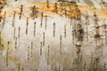 Closeup of a tree bark texture birchen - PhotoDune Item for Sale